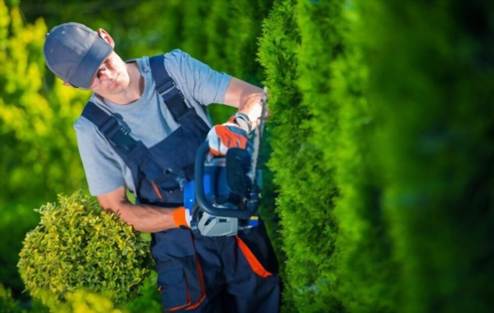 man trimming the bush